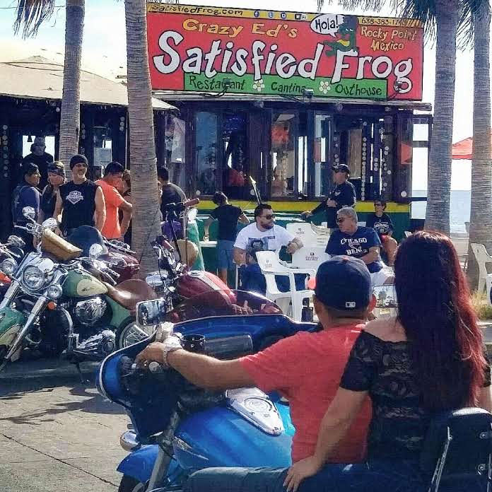 satisfied frog-outside